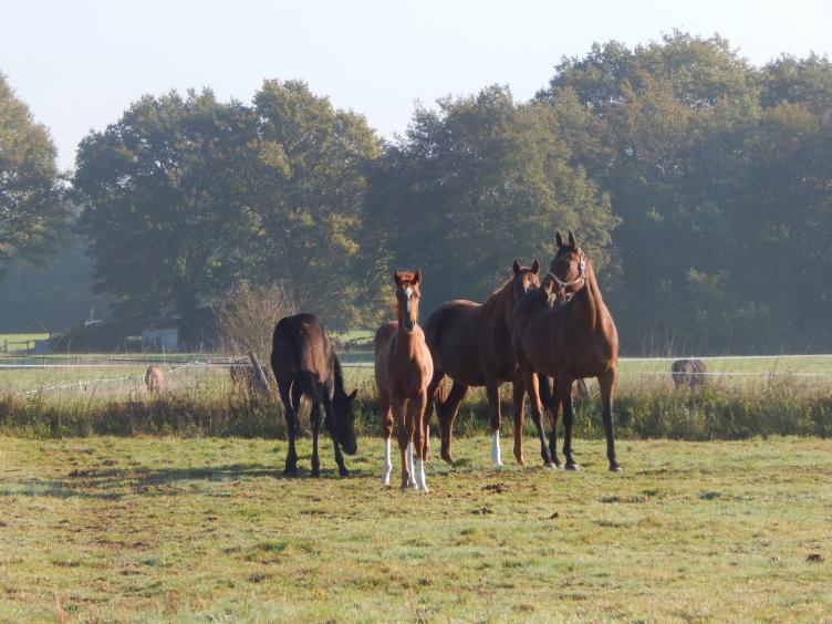 chevaux_valo.jpg