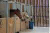Aide à l'achat de matériel dans les centres équestres