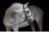 Développer des activités connexes au monde du cheval